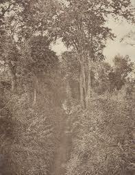 Tiger Alley